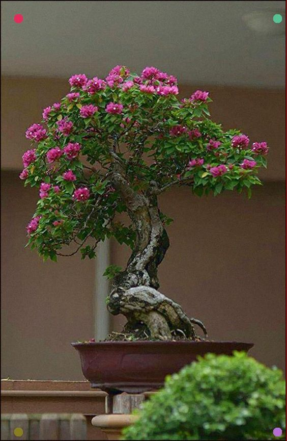 Tips For Watering A Bonsai Tree Life Ideas